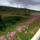 The Cape Spear Trail by Brian Carey