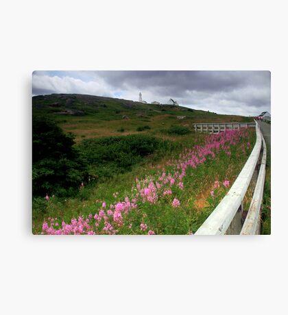 The Cape Spear Trail Canvas Print