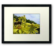 Bee's World - honeybee close-up, vista of flowers Framed Print