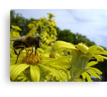Bee's World - honeybee close-up, vista of flowers Canvas Print