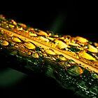 After the Rain by Nicole Shea