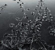Serenity by Chris Chamberlain