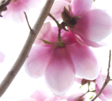 Essence of Spring Sticker