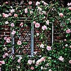 Ring 'o Roses by Steve Barnes