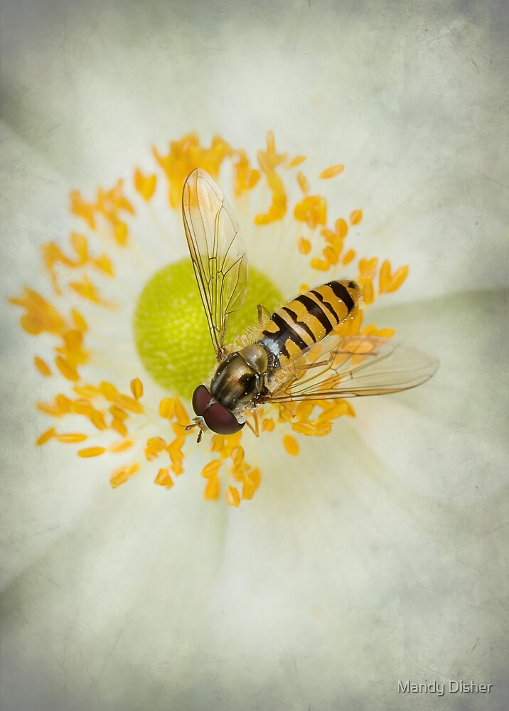 Natures worker by Mandy Disher