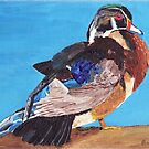 Wood Duck by Rodney Campbell