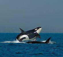 Orca Fun by Rich Summers