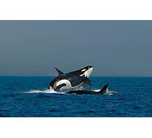 Orca Fun Photographic Print