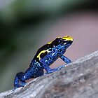 The frog by Michael Walker