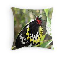 Cairns birdwing 2  Throw Pillow