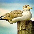 Seagull I  /  South Carolina by Shelley  Stockton Wynn