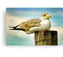 Seagull I  /  South Carolina Canvas Print