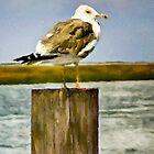 Seagull II  /  South Carolina by Shelley  Stockton Wynn