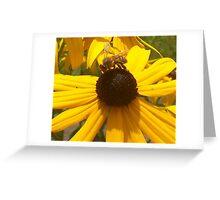 Black-Eyed Susan Bee Greeting Card