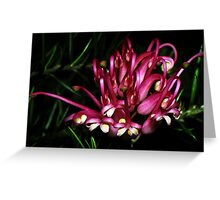 Flame Grevillea 19871006 0018 Greeting Card