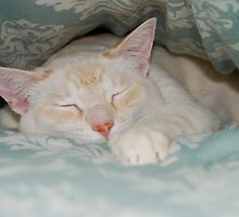 Little Munster at the Foot of the Bed by montecore827