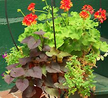 Container garden by Tracey Hampton