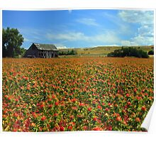 Field Of Color Poster