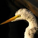 The Ruffled Egret by Nukee