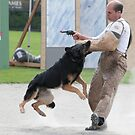 Police Dog Action by David Friederich
