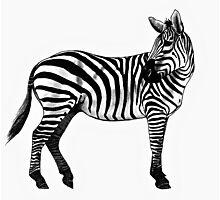 Inky Zebra Photographic Print