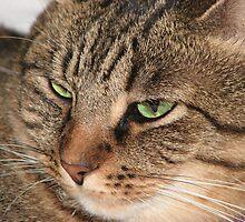 My Green-eyed Charmer by PhotosbyNan