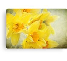 Spring gold Canvas Print