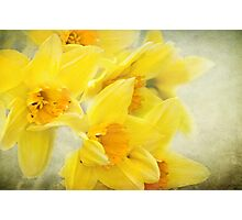 Spring gold Photographic Print