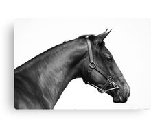 The Thoroughbred Canvas Print