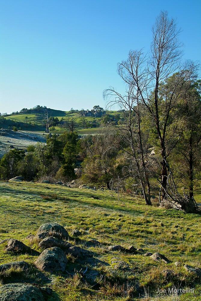 Morning Frost, Strathbogie Ranges,Victoria by Joe Mortelliti