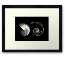 Deconstructed Nautilus Framed Print