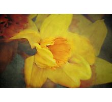 A host of golden daffodils Photographic Print