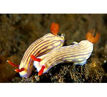 Nudi Pair Photographic Print