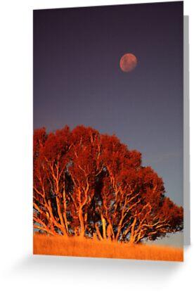Tinderry Moon by Melanie Roberts