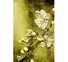 U is for ......Under the plum tree Photographic Print