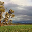 winter in the wimmera by Andrew Cowell