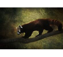 R is for.....Red Panda Photographic Print