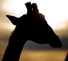 Sunset Giraffe by fatdade