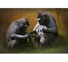 M is for.......monkeying around Photographic Print