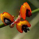 Wild Flowers by Jon Staniland