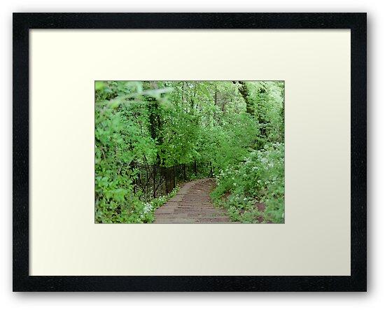 The Path in Bath - England by Bryan Freeman