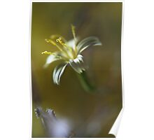Yellow symphony (from wild flowers collection) Poster