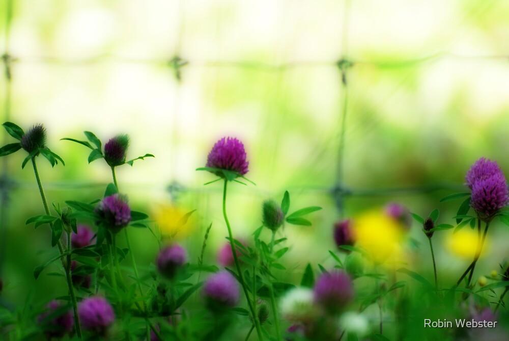 Wildflower Medely II by Robin Webster