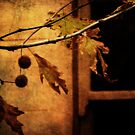 Autumn  by Trish Woodford