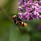 Bee by AnnDixon