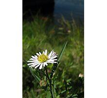 One Last Summer Flower Photographic Print