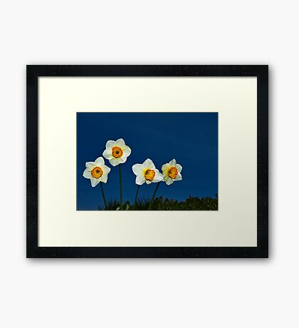 The Deadly Daffodils - Brighton - England Framed Print