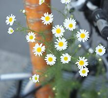 Flowers, tree, bicycle by jalb