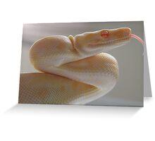 Albino Greeting Card