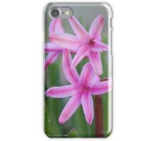 Hyacinthus Orientalis - Queen Of The Pinks | Center Moriches, New York iPhone Case/Skin